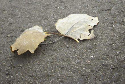 Gele bladeren in de herfst